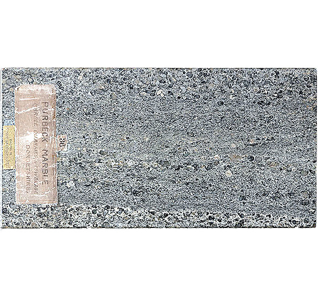 Limestone Purbeck Marble Virtual Microscope